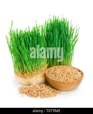 Wheat green sprouts, wheat seeds in the wooden bowl isolated on white background. - Stock Photo
