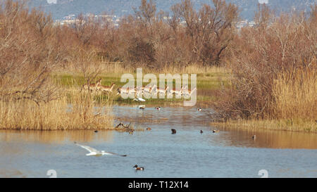 Group of fallow deer in a national park on the lake at springtime - Stock Photo