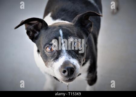 Small pet Dog for a child stray, adopted - Stock Photo