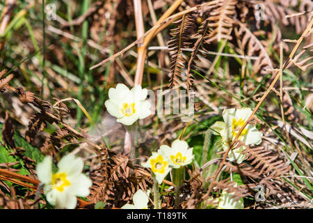 Bray Head, Ireland. 24th March, 2019 Spring is came. Wild flowers showing their beauty under the Sun. Credit: Vitaliy Tuzov/Alamy Live News. - Stock Photo
