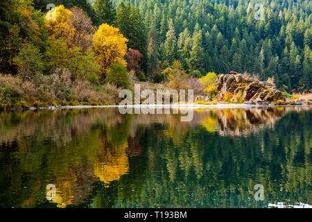 Fall colors of orange and yellow reflect in a calm section of the rogue river with pine forest in the background and a large rock on the right side - Stock Photo