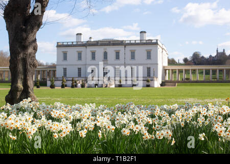 London, UK. 25th March, 2019. White and orange daffodils pictured in sunshine in front of the historic Queen's House in Greenwich. Credit: Rob Powell/Alamy Live News - Stock Photo