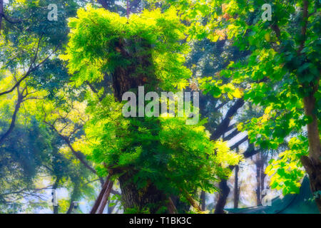 This unique image shows a beautiful mysterious fantasy tree in the world famous city park, Lumpini Park in Bangkok - Stock Photo