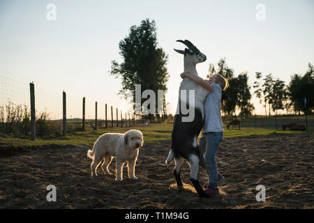 Girl dancing with goat in rural field - Stock Photo