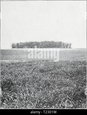 Archive image from page 40 of The diminished flow of the - Stock Photo