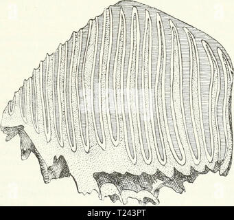 Archive image from page 738 of Die Säugetiere Einführung in die - Stock Photo