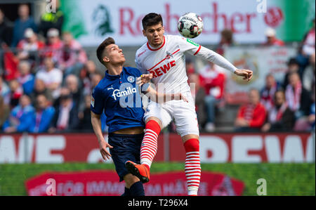 Cologne, Germany. 31st Mar, 2019.  Soccer: 2nd Bundesliga, 1st FC Cologne - Holstein Kiel, 27th matchday in the Rhein-Energie-Stadion. Kiel's Mathias Honsak (l) and Cologne's Jorge Mere fight for the ball. Photo: Guido Kirchner/dpa - IMPORTANT NOTE: In accordance with the requirements of the DFL Deutsche Fußball Liga or the DFB Deutscher Fußball-Bund, it is prohibited to use or have used photographs taken in the stadium and/or the match in the form of sequence images and/or video-like photo sequences. Credit: dpa picture alliance/Alamy Live News - Stock Photo