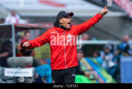 Cologne, Germany. 31st Mar, 2019.  Soccer: 2nd Bundesliga, 1st FC Cologne - Holstein Kiel, 27th matchday in the Rhein-Energie-Stadion. Cologne coach Markus Anfang gives instructions to his players. Photo: Guido Kirchner/dpa - IMPORTANT NOTE: In accordance with the requirements of the DFL Deutsche Fußball Liga or the DFB Deutscher Fußball-Bund, it is prohibited to use or have used photographs taken in the stadium and/or the match in the form of sequence images and/or video-like photo sequences. Credit: dpa picture alliance/Alamy Live News - Stock Photo