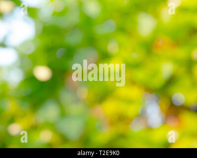 Abstract background and texture of natural with blurred and bokeh design - Stock Photo