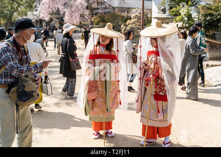 Two young Japanese women, wearing Heian period (900-1100), costume called Tsubo Shozoku walking along a road with the springtime cherry blossoms on Miyajima island in Japan. - Stock Photo