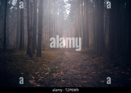 Mysterious forest in the fog - Stock Photo