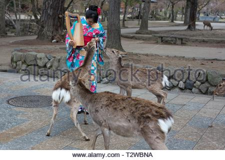 A young woman wearing traditional Japanese dress, with deer standing near her, in Nara, Japan. - Stock Photo