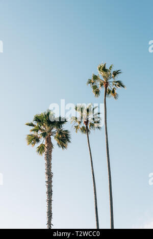 Palm trees at Treasure Island Park, in Laguna Beach, Orange County, California - Stock Photo