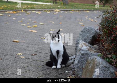 Black/White Cat in Autumn | Katze im Herbst - Stock Photo