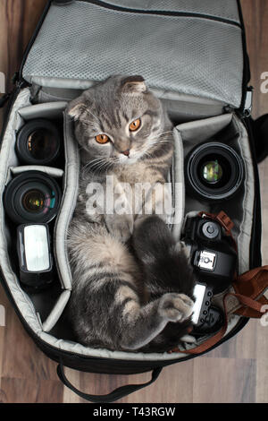the cat sits in the bag - Stock Photo