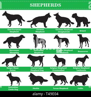 Set of 20 shepherds dogs. Vector set of shepherds breeds dogs standing in profile. Isolated dogs breed silhouettes set in black color on white backgro - Stock Photo