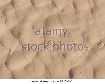 Animal tracks in sand - Stock Photo