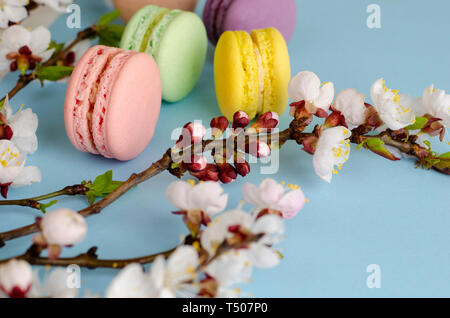 Sweet macarons or macaroons decorated with blooming apricot flowers on pastel blue background. Copy space. Greeting card and spring concept. No diet d - Stock Photo