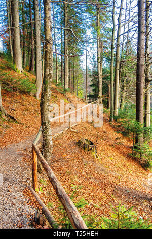 footpath through autumn forest in late autumn. wooden fence along the edge. beautiful nature background of october - Stock Photo