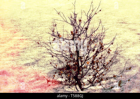 winter magic in nature. lonely tree in the snow glitters in the sun - Stock Photo