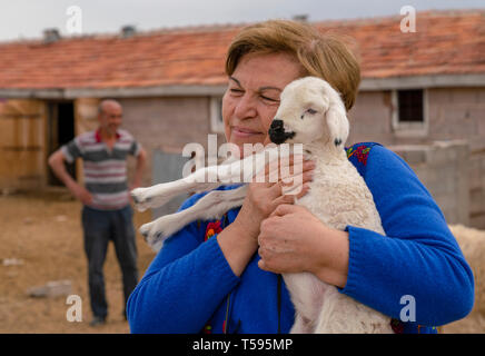 Konya, Turkey-April 14 2019: An old, well-smiling farmer, holds in her hands her beloved white lamb with barn and sheep in background. Concept of ecol - Stock Photo