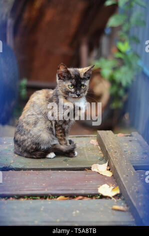 A small mottled kitten sitting on a old wooden boards in the garden - Stock Photo
