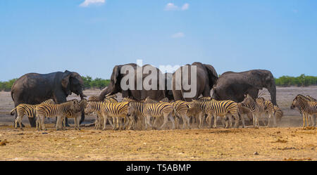 African elephants and zebras at a waterhole in Etosha National Park, Namibia - Stock Photo
