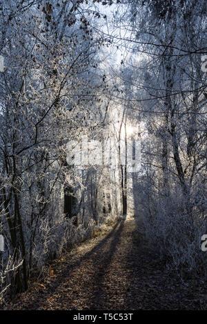 Waldweg im Winter - Stock Photo