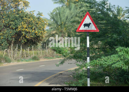 Beware of sheep crossing sign at the curve of a street in the United Arab Emirates. - Stock Photo