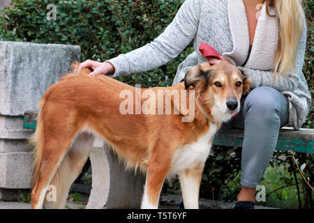 Beautiful girl with his Shetland sheepdog dog sitting and posing in front of camera on wooden bench at city park. Portrait of owner and Rough collie. - Stock Photo