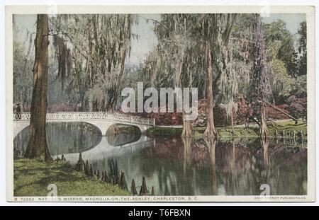Detroit Publishing Company vintage postcard reproduction of Nature's Mirror, Magnolia on the Ashley, Charleston, South Carolina, 1914. From the New York Public Library. () - Stock Photo