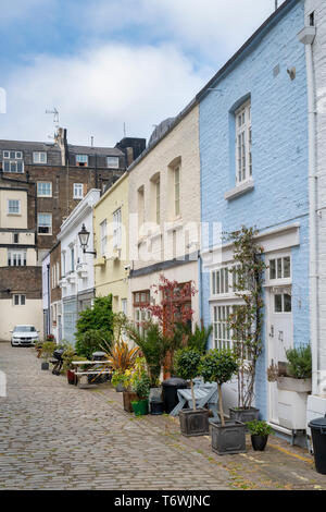 Houses and small trees and shrubs in containers in Radnor Mews, Bayswater, London, England - Stock Photo