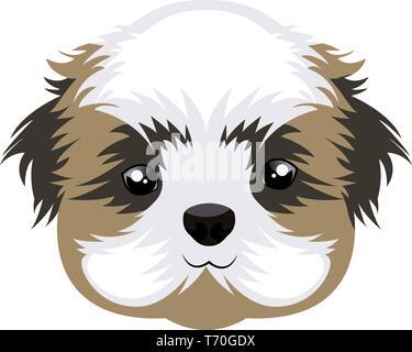 Shih Tzu illustration vector on white background - Stock Photo
