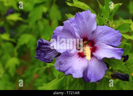 Crop pollination - Stock Photo