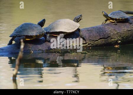 Animals in Hangerweiher Aachen and Wiesbaden - Stock Photo