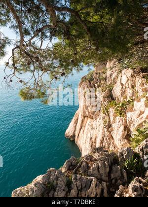 Rocky coast and pine trees over the calm blue sea in Croatia - Stock Photo