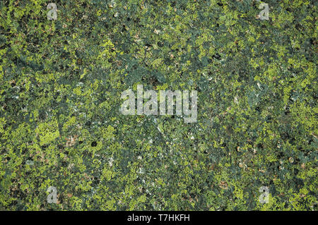 Stone covered by green moss and lichen forming a singular background at Serra da Estrela. The highest mountain range in continental Portugal. - Stock Photo