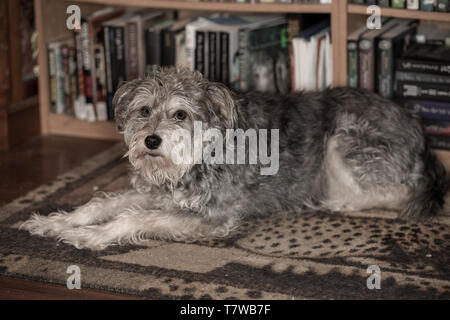 An educated dog - Stock Photo