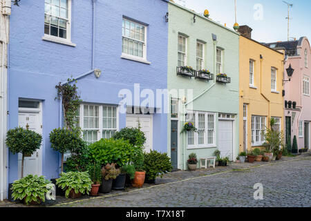 Colourful painted houses and small trees and shrubs in containers in Conduit mews , Bayswater, London, England - Stock Photo