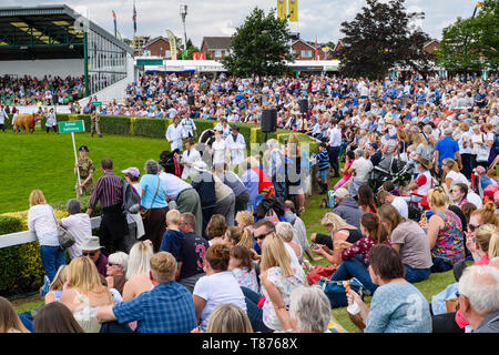 Big crowd of people sitting by main arena in sun, watch Grand Cattle Parade (livestock & handlers) - The Great Yorkshire Show, Harrogate, England, UK. - Stock Photo