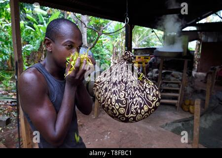 France, Mayotte island (French overseas department), Grande Terre, Ouangani, weighing at the distillery of Ylang ylang flowers freshly picked, an essential oil is extracted used in perfumery, Hassani Soulaimana Aromaore co leader - Stock Photo