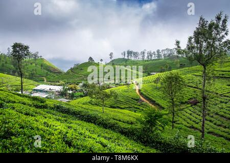 Sri Lanka, Uva province, Haputale, the village is surrounded by the tea plantations of Dambatenne group founded by Thomas Lipton in 1890 - Stock Photo