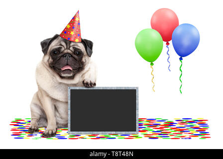 frolic smiling birthday party pug dog, with blackboard, confetti and balloons decoration, isolated on white background - Stock Photo