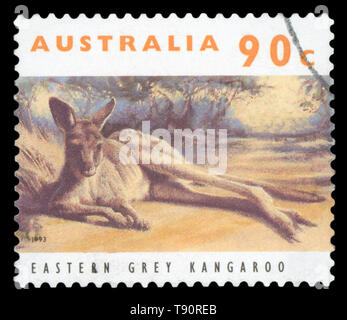 AUSTRALIA - CIRCA 1993: Stamp printed in Australia with image of an Eastern Grey Kangaroo, circa 1993. - Stock Photo
