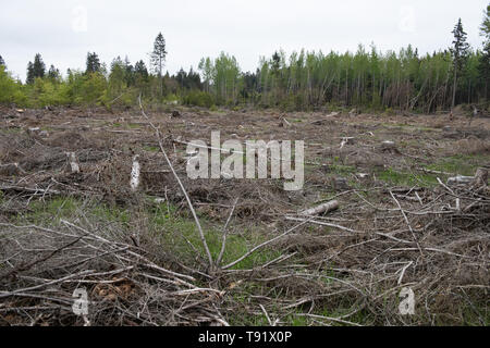 Sankt Ottilien, Germany. 16th May, 2019. Photograph of a forest area in the Söhrewald that was severely affected by the windthrow. After the drought of 2018, trees are weakened and susceptible to bark beetle infestation. Credit: Swen Pförtner/dpa/Alamy Live News - Stock Photo