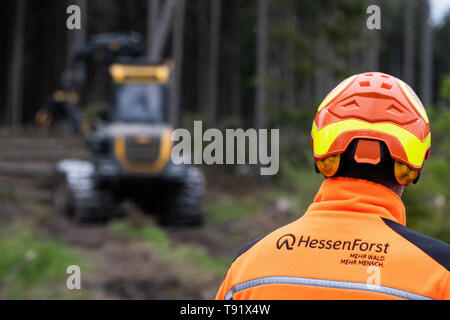Sankt Ottilien, Germany. 16th May, 2019. An employee of HessenForst is standing in front of a harvester (wood harvester) on an area of forest in the Söhrewald that has been severely affected by the windthrow. After the drought of 2018, trees are weakened and susceptible to bark beetle infestation. Credit: Swen Pförtner/dpa/Alamy Live News - Stock Photo