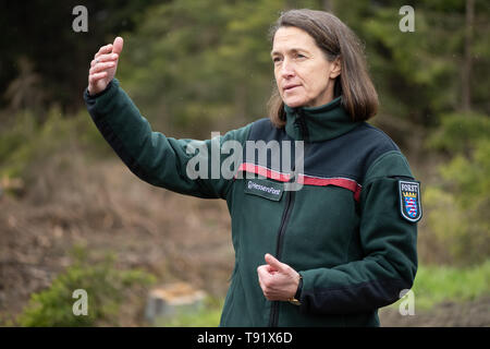 Sankt Ottilien, Germany. 16th May, 2019. Petra Westphal, head of the forestry office in Melsungen, gesticulates during a visit to a forest area in the Söhrewald that has been severely affected by the windthrow. After the drought of 2018, trees are weakened and susceptible to bark beetle infestation. Credit: Swen Pförtner/dpa/Alamy Live News - Stock Photo