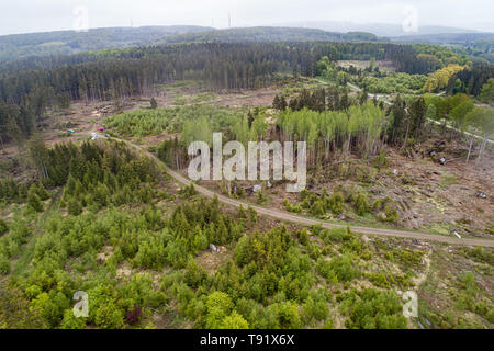 Sankt Ottilien, Germany. 16th May, 2019. Photograph of an area of forest in the Söhrewald forest severely affected by the windthrow (aerial photograph with a drone). After the drought of 2018, trees are weakened and susceptible to bark beetle infestation. Credit: Swen Pförtner/dpa/Alamy Live News - Stock Photo