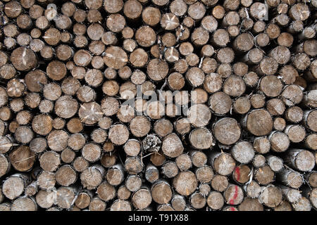 Sankt Ottilien, Germany. 16th May, 2019. Spruce logs are lined up along the edge of a forest area in the Söhrewald that has been severely affected by the windthrow. After the drought of 2018, trees are weakened and susceptible to bark beetle infestation. Credit: Swen Pförtner/dpa/Alamy Live News - Stock Photo