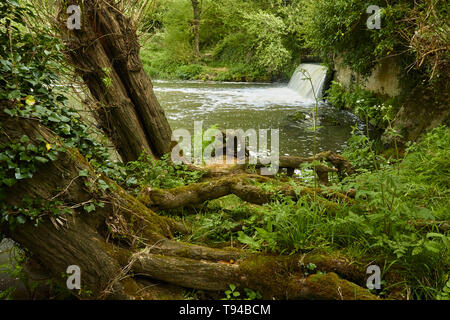 River Medway waterfall and Sussex countryside path during early spring, England, United Kingdom, Europe - Stock Photo